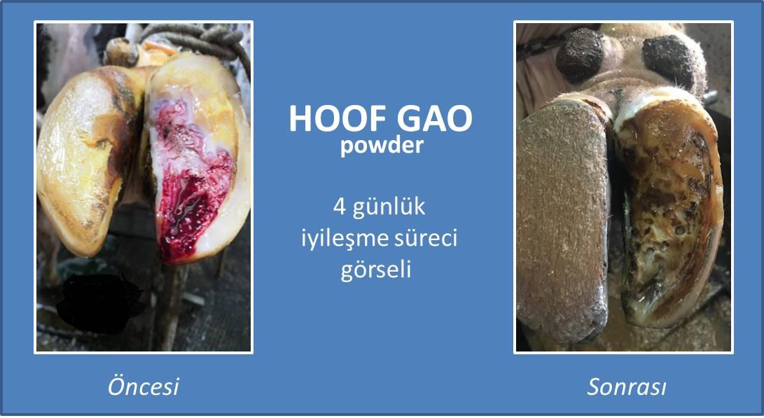 Hoof Gao öncesi ve sonrası
